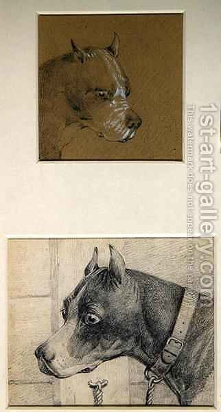 Head and shoulders of a boxer dog by Henry Thomas Alken - Reproduction Oil Painting