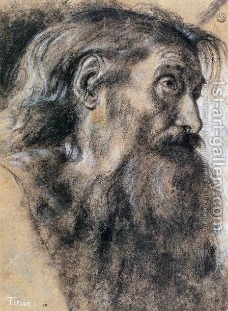 Head of St Jerome by Giovanni Girolamo Savoldo - Reproduction Oil Painting