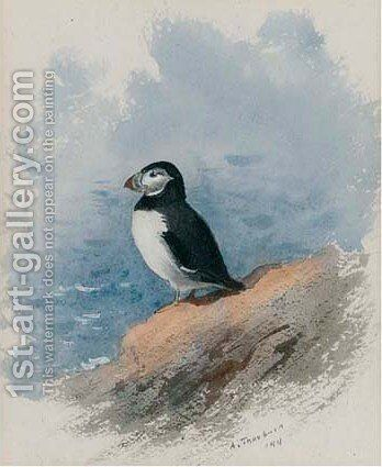 Study of a seagull by Archibald Thorburn - Reproduction Oil Painting