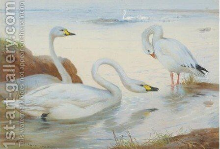 Bewick's Swan by Archibald Thorburn - Reproduction Oil Painting
