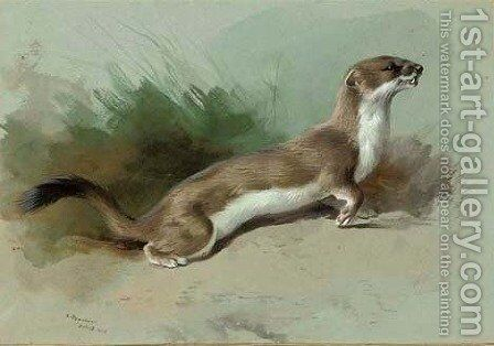 A stoat on the alert by Archibald Thorburn - Reproduction Oil Painting