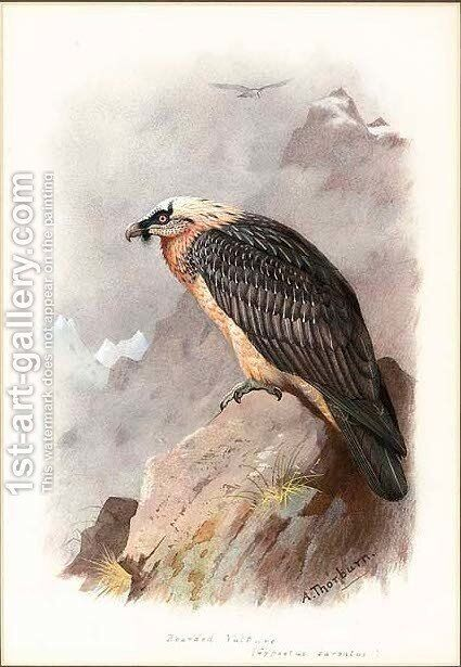 A bearded vulture by Archibald Thorburn - Reproduction Oil Painting