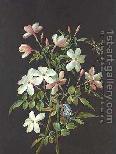 Two stems of jasmine with a butterfly and a horsefly by Barbara Regina Dietzsch - Reproduction Oil Painting