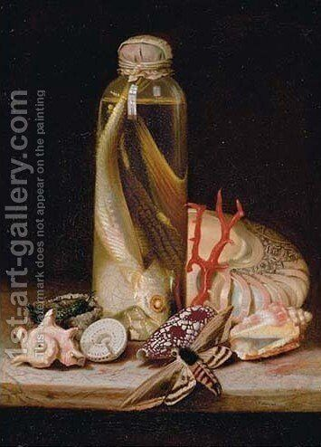 Shells 2 by (after) Etienne Moulineuf - Reproduction Oil Painting