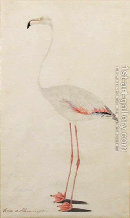 Flamingo by English School - Reproduction Oil Painting