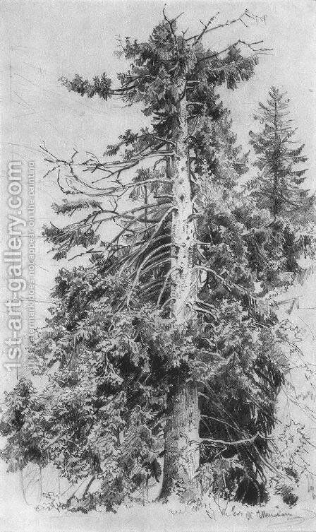 Fir by Ivan Shishkin - Reproduction Oil Painting
