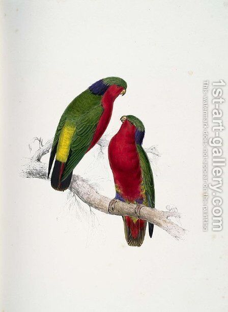 Psittacula kuhlii (Kuhl's Lorikeets) by Edward Lear - Reproduction Oil Painting