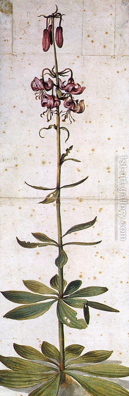 Martagon Lillium by Albrecht Durer - Reproduction Oil Painting