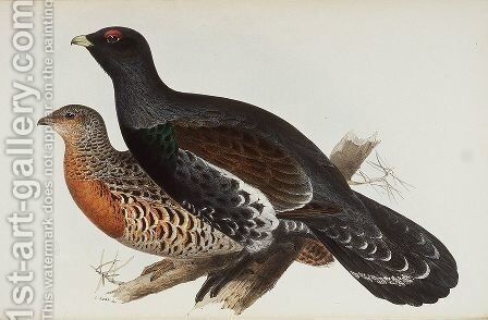 Capercaillie or Cock of the Wood by Edward Lear - Reproduction Oil Painting