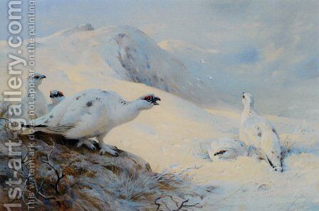Ptarmigan Calling in the Snow by Archibald Thorburn - Reproduction Oil Painting