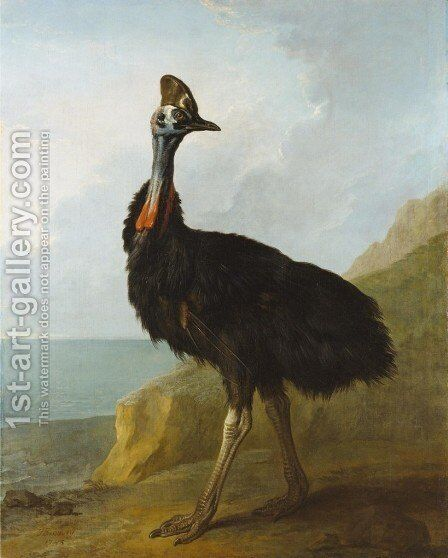 Cassowary by Jean-Baptiste Oudry - Reproduction Oil Painting
