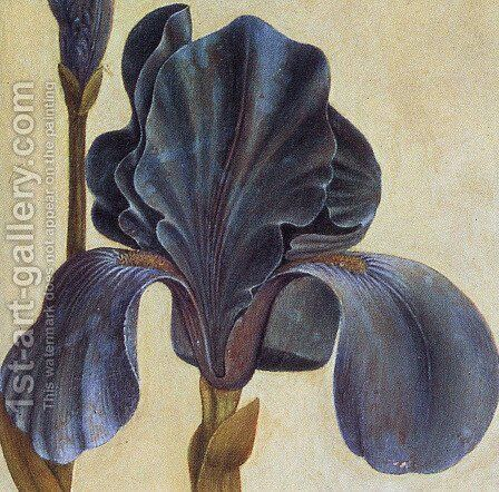 Troiana Iris (Detail) by Albrecht Durer - Reproduction Oil Painting