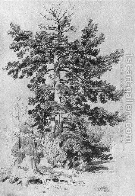 Pine by Ivan Shishkin - Reproduction Oil Painting