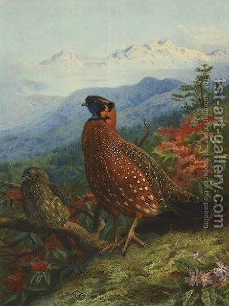 Satyr-Tragopan by Archibald Thorburn - Reproduction Oil Painting