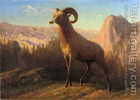 A Rocky Mountain Sheep  Ovis  Montana by Albert Bierstadt - Reproduction Oil Painting