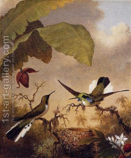 Black Eared Fairy by Martin Johnson Heade - Reproduction Oil Painting