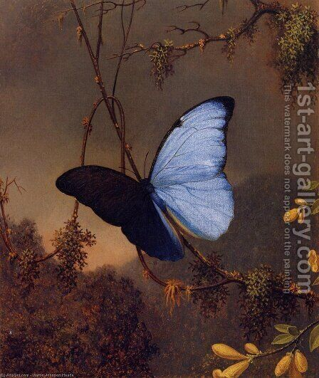 Blue Morpho Butterfly by Martin Johnson Heade - Reproduction Oil Painting