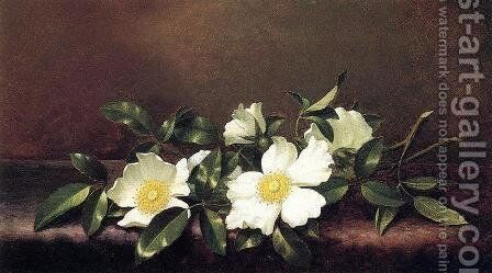 Cherokee Roses On A Purple Velvet Cloth by Martin Johnson Heade - Reproduction Oil Painting