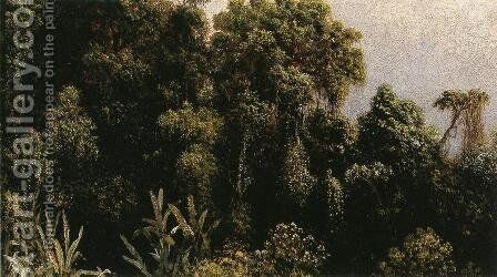 Forest Study  Brazil by Martin Johnson Heade - Reproduction Oil Painting