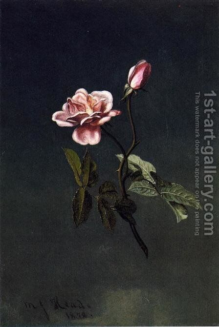 Pink Rose by Martin Johnson Heade - Reproduction Oil Painting