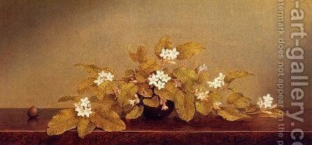 Trailing Arbutis by Martin Johnson Heade - Reproduction Oil Painting