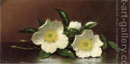 Two Cherokee Rose Blossoms On A Table Aka Cherokee Roses by Martin Johnson Heade - Reproduction Oil Painting