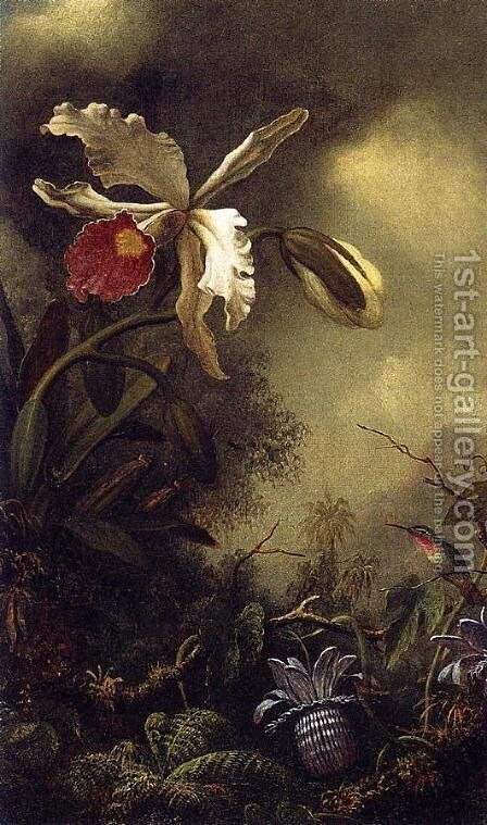 White Orchid And Hummingbird by Martin Johnson Heade - Reproduction Oil Painting