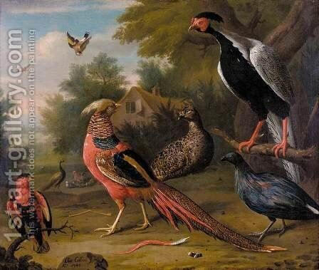 Exotic Pheasants and Other Birds 1740 by Charles Collins - Reproduction Oil Painting