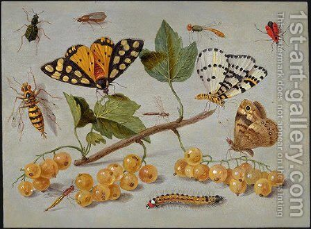 Butterflies and Insects c. 1655 by Jan van Kessel - Reproduction Oil Painting