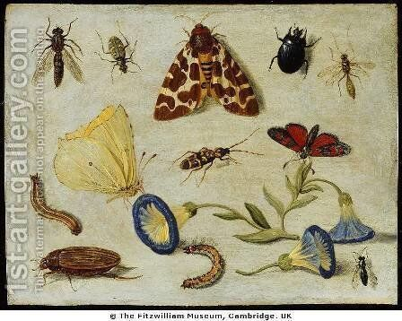 Insects by Jan van Kessel - Reproduction Oil Painting