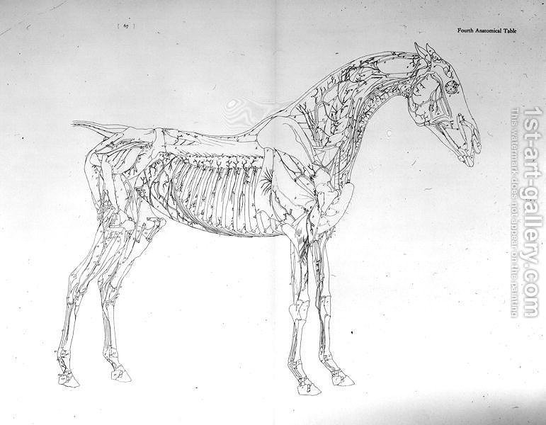 Fourth Anatomical Table From The Anatomy Of The Horse Painting By