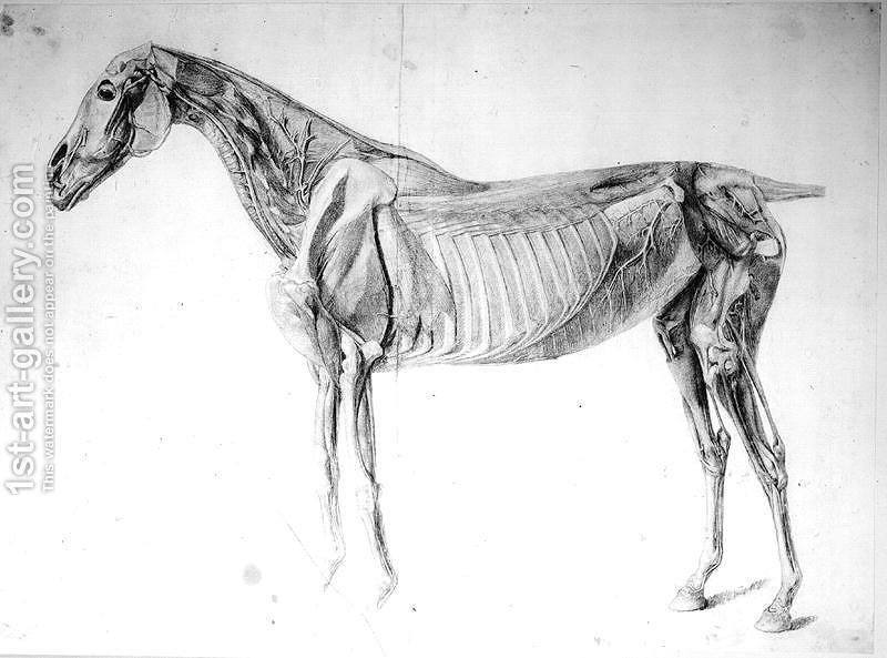 Diagram From The Anatomy Of The Horse Painting By George Stubbs