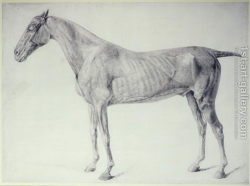 Diagram From The Anatomy Of The Horse 2 Painting By George Stubbs