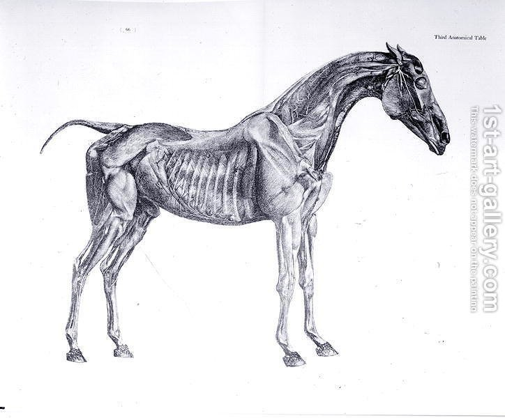 Third Anatomical Table From The Anatomy Of The Horse Painting By